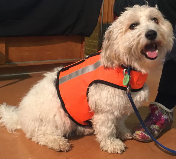 High Vis Harness